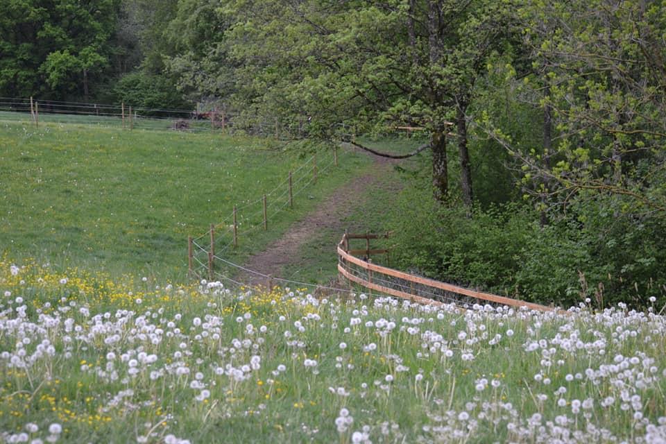 Trail_02